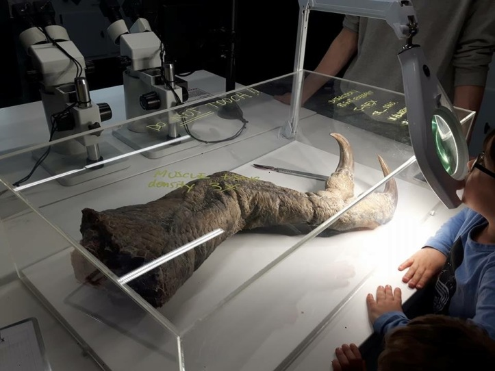 The Greenwich Mummy Blog | Dinosaurs in the wild review