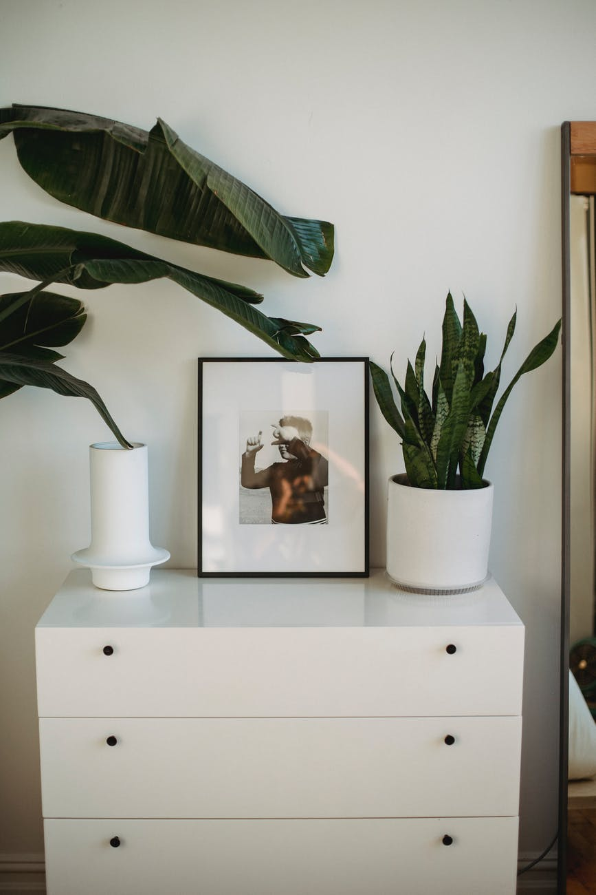 The Wandering Mother Blog | easy care houseplants for beginners