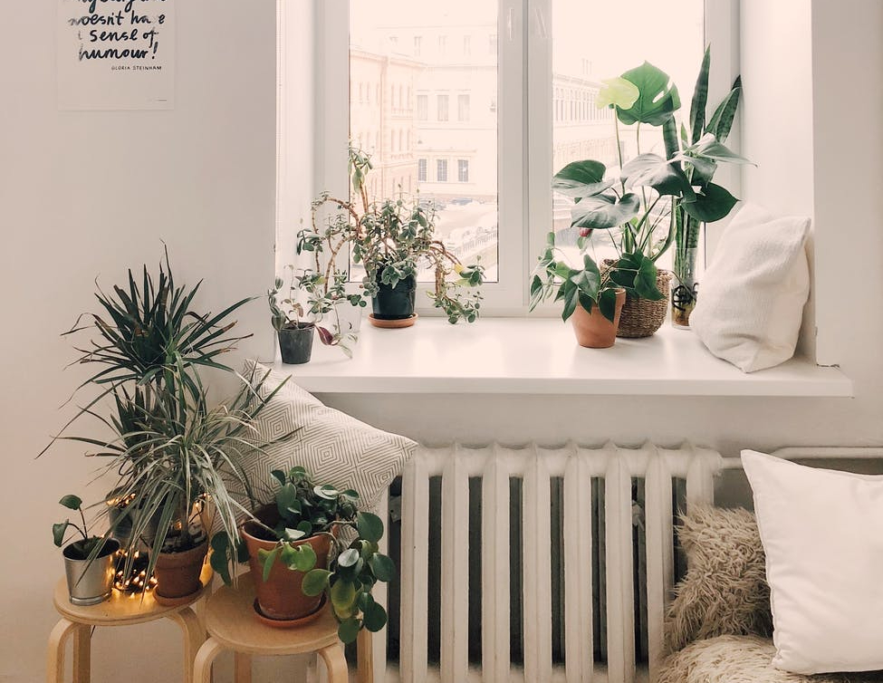 The Wandering Mother Blog | Top 5 easy care houseplants for beginners